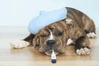 Kundenbild klein 2 Tierärztliche Praxis Degen Irina