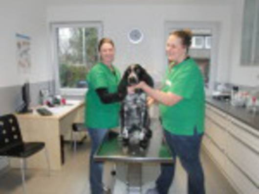 Kundenbild groß 1 Tierärztliche Praxis Degen Irina
