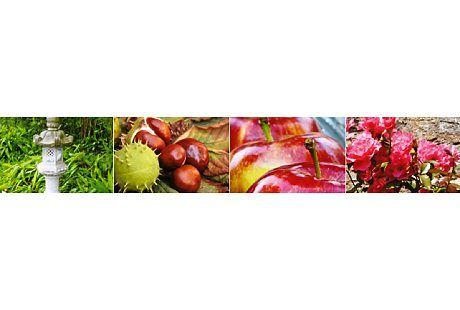 Kundenbild klein 1 Lefèvre Garten- und Landschaftsbau