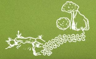 Garten-und Landschaftsbau Tönnies