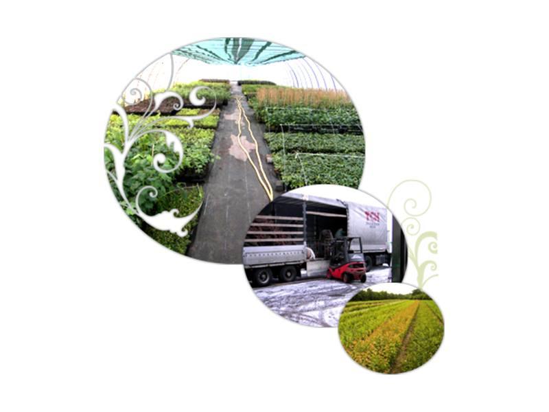Holstein Pflanzen GmbH