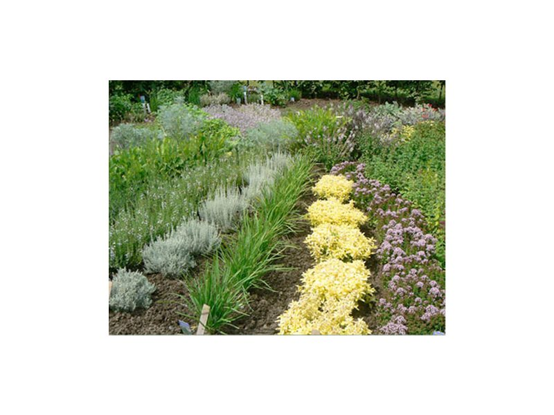 Garten Und Landschaftsbau Winsen Luhe gartenbau winsen luhe gute adressen öffnungszeiten
