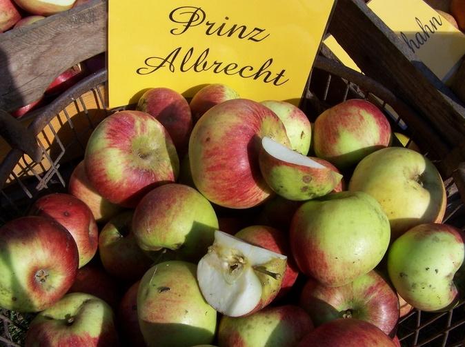 Frick's Apfelwelt Rollenhagen