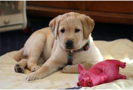 Braun Labbiland Hundefachwirtin (IHK)  Hundeschule und -pension